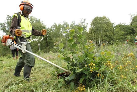 un-debroussaillage-tres-selectif-les-eco-cantonniers-de-l-adeis-ne-coupent-que-les-arbustes-et-le